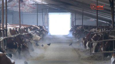 Мордовия вошла в ТОП-30 регионов-лидеров России по производству молока в сельхозпредприятиях